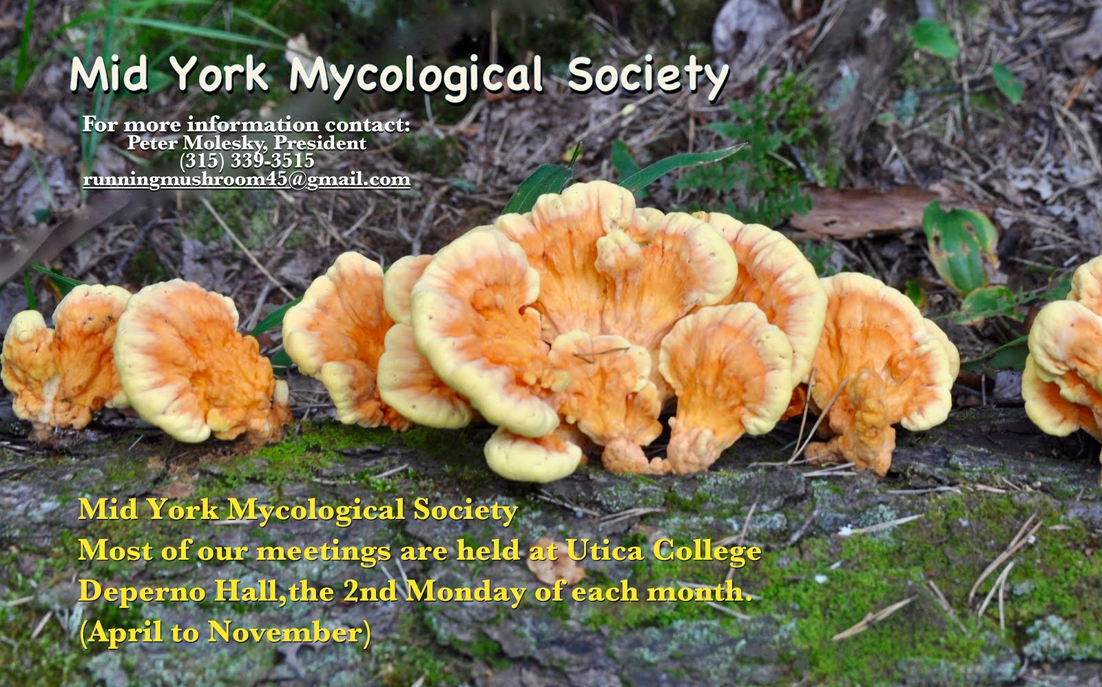 MidYork Mycological Society