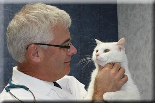 Dr. Bailey examines a white cat named Buddy