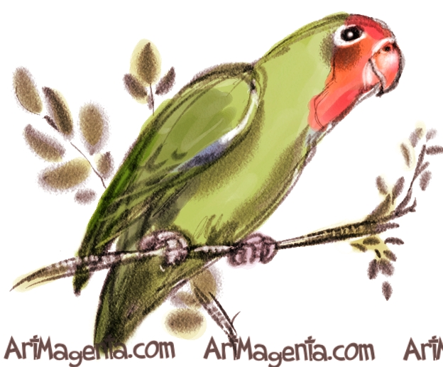Red-headed Lovebird sketch painting. Bird art drawing by illustrator Artmagenta.