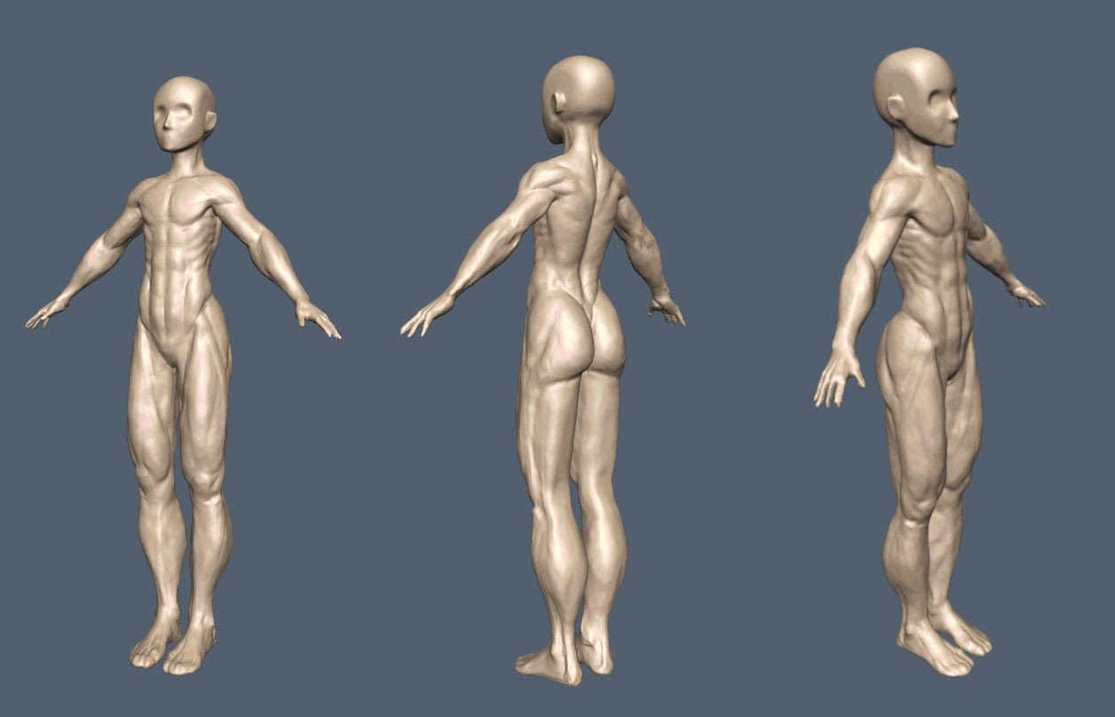 In Pursuit Of Optimal Female Muscle Study Sculpt 01