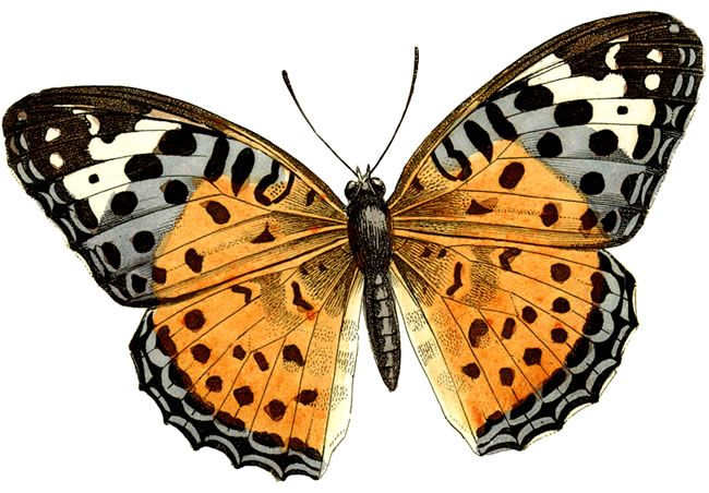 free vintage butterfly clipart - photo #35
