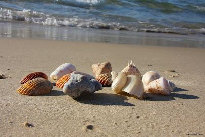 seashells on the beach other تعرف على سبب سماع صوت المحيط في القواقع