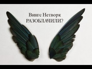 правда и отзывы о компании Вингс Нетворк