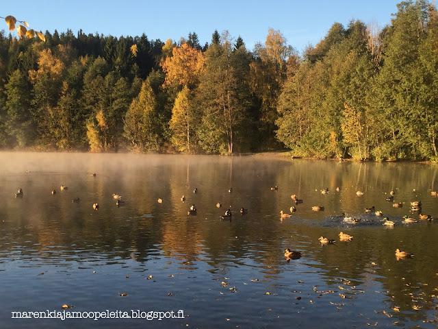 Ducks having a bath in a morning mist