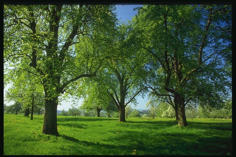 Indah lukisan alam pemandangan gambar pemandangan pemandangan alam