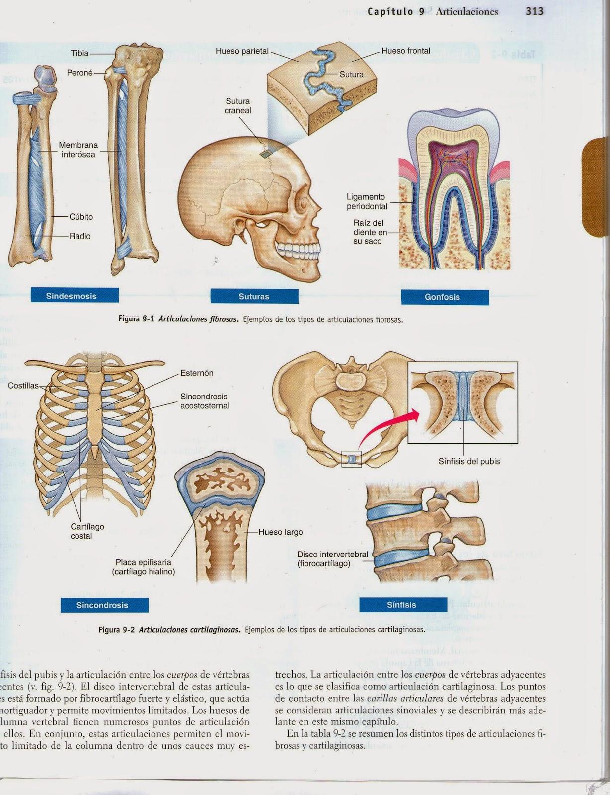 Mariano Acosta Biología: Articulaciones. Imágenes. Para 4to Biológico.