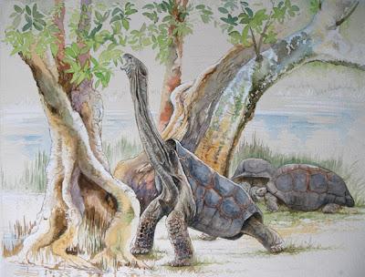 reptiles extintos Cylindraspis vosmaeri