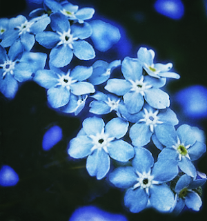 Forget Me Not | Alzheimer's Reding Room