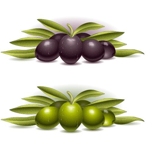 Banner de olivas