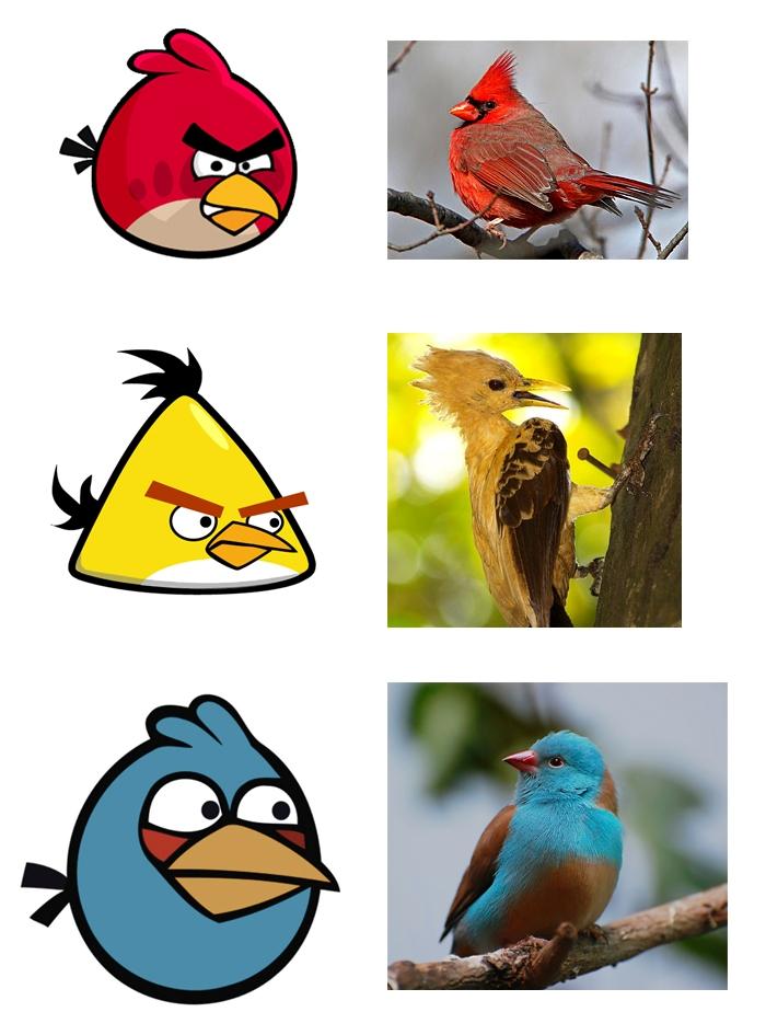 angry birds in viata reala
