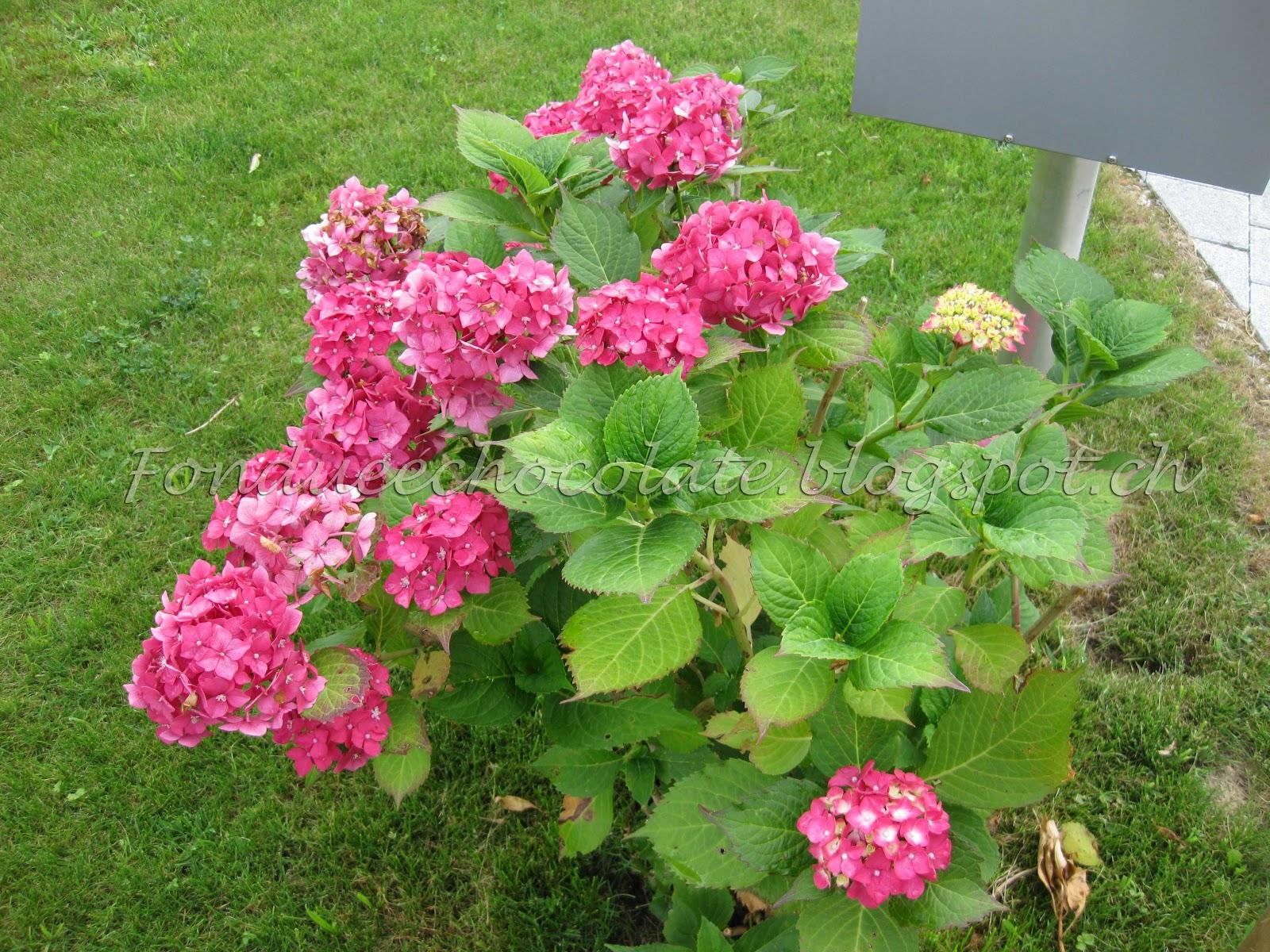 Plantas Para Jardim Que Nao Precisam De Muita Agua