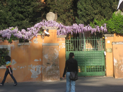 Wisteria along a yellow wall in Rome