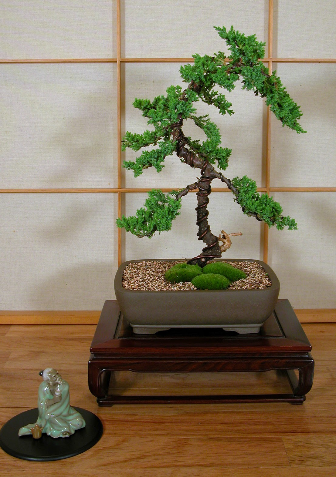 Bonsai Tree Beginner Basics Creating A Bonsai For The First Time