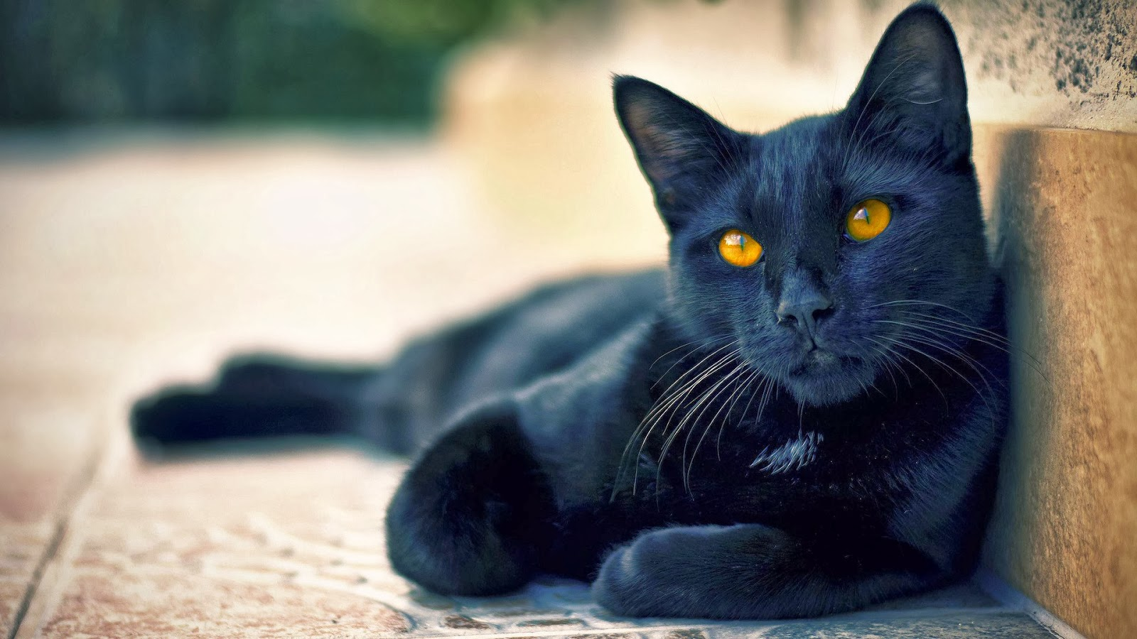 Black Cat Wallpapers HD Free Download ~ Unique Wallpapers