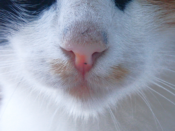 multi-colored cat cute nose