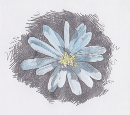 Anenome