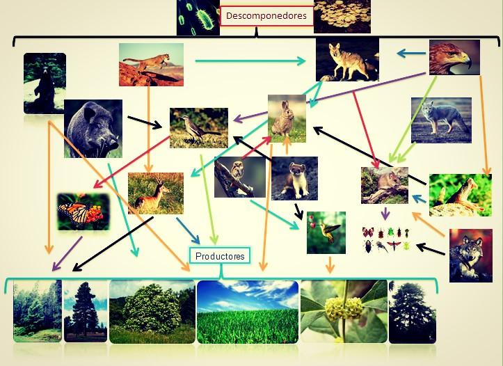 Frida Daniela Ramírez Biología IV 618: Trama alimenticia (Mariposas ...