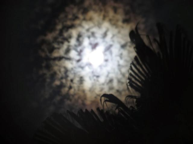 Nightfall moon