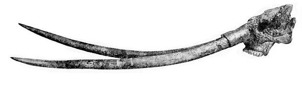 Anancus skull