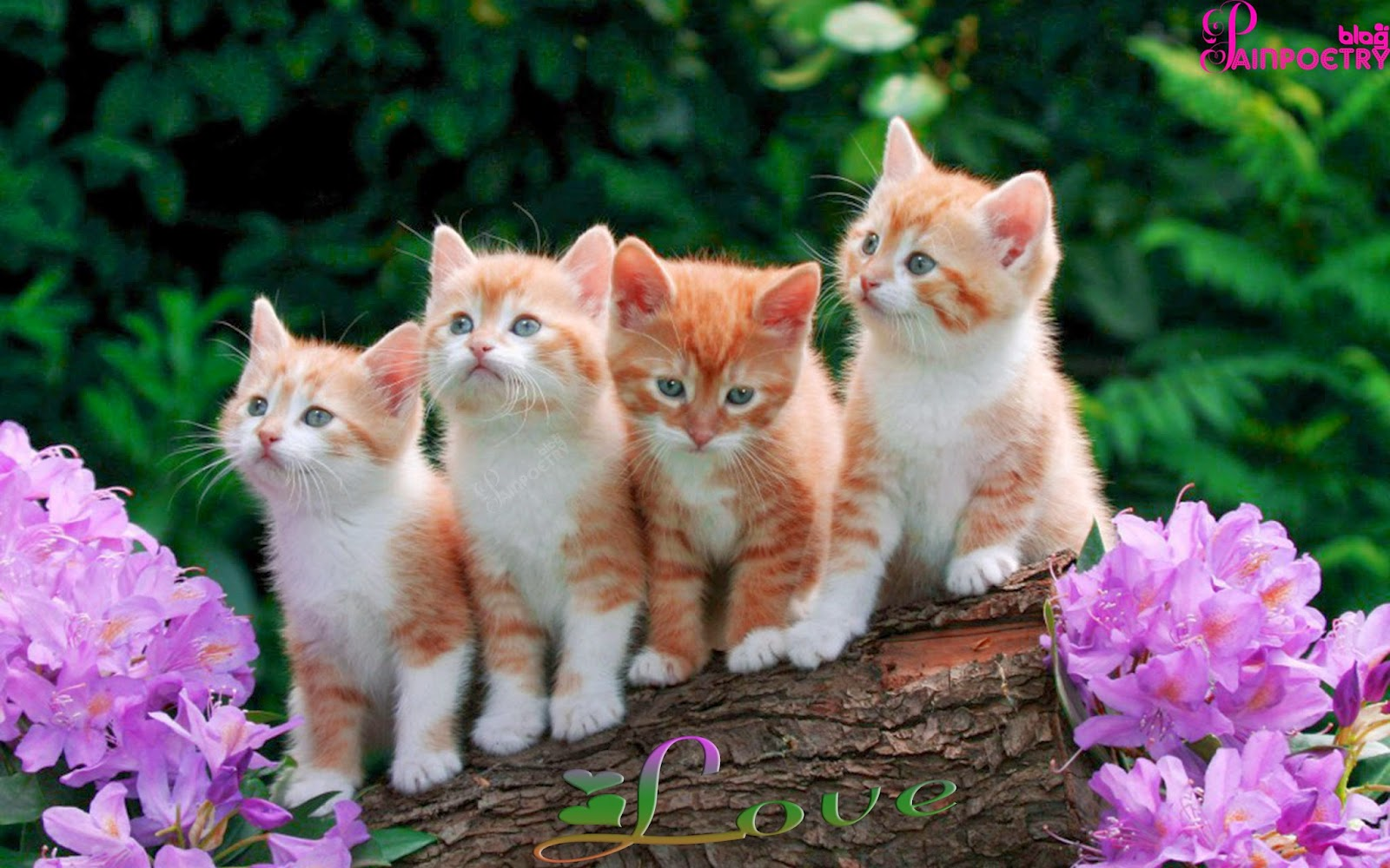 Love-Image-Wallpaper-Show-Love-With-Four-Cats-Wide