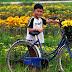 Ảnh bìa Facebook vườn hoa cúc muôn màu