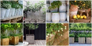 CONTAINER GARDENING @ MY PINTEREST