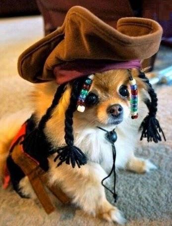 Los 10 Mejores Disfraces de Halloween para Perros