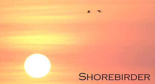Shorebirder