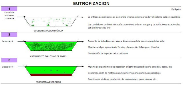 fases eutrofizacion