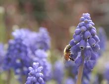 Spring Garden Stroll...
