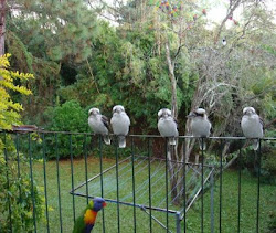 Some of our daily visitors
