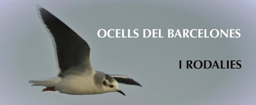 Ocells del Barcelonès i rodalies
