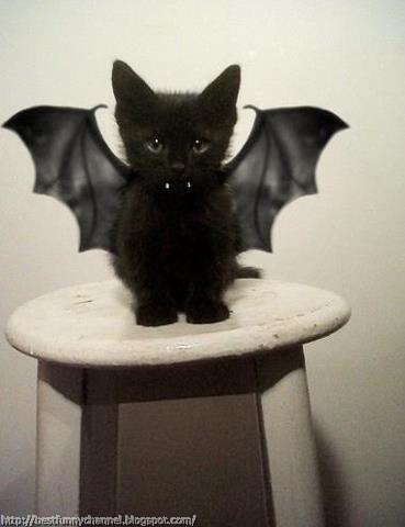 Cat bat.