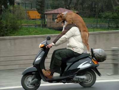"""motorcycle-dog-3 - """"Whither thou goest, I will go...""""  - Photos Unlimited"""