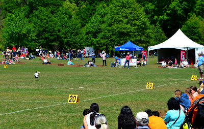 Dog Disc Show, Atlanta Dogwood Festival