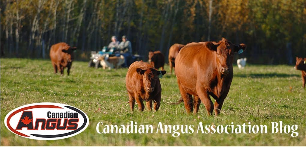 Canadian Angus Association Blog