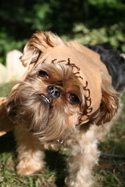 If we can dress out snub-nosed dogs like Ewoks, Darth Vader or Yoda, I ...