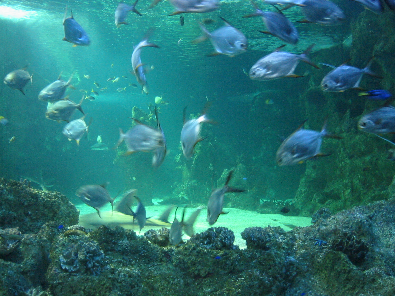 World visits sydney aquarium one of the greatest for Aquarium video