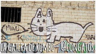 Gato Miau La Roda Albacete 3