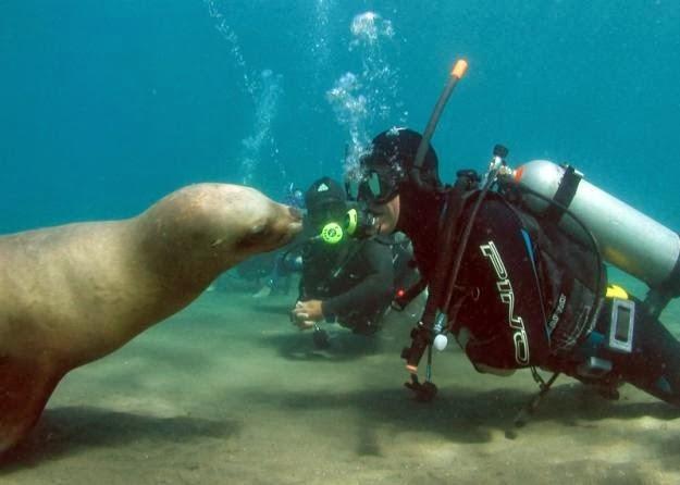 10 Atracciones turísticas de las Islas Galápagos