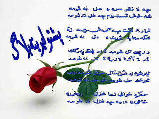 rose with pashto poetry(picture)shayari
