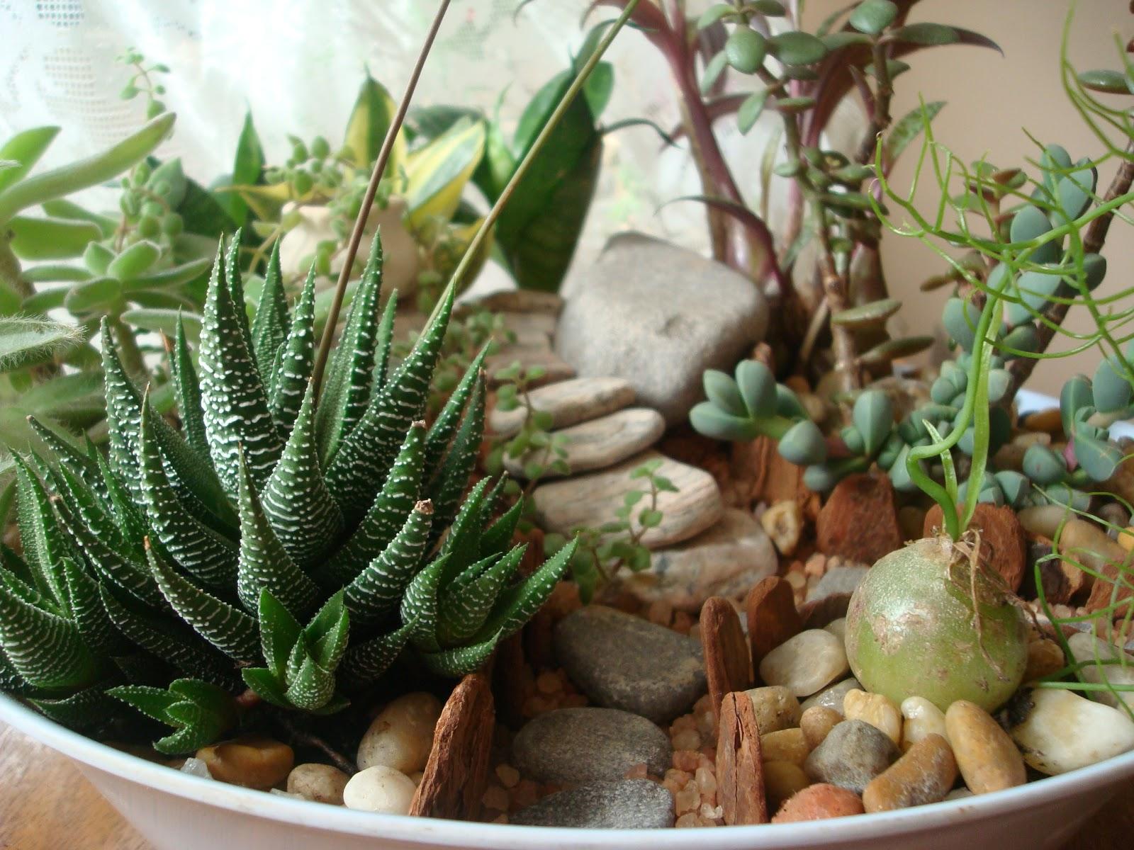 jardim plantas suculentas Suculenta Quer aprender a fazer um mini