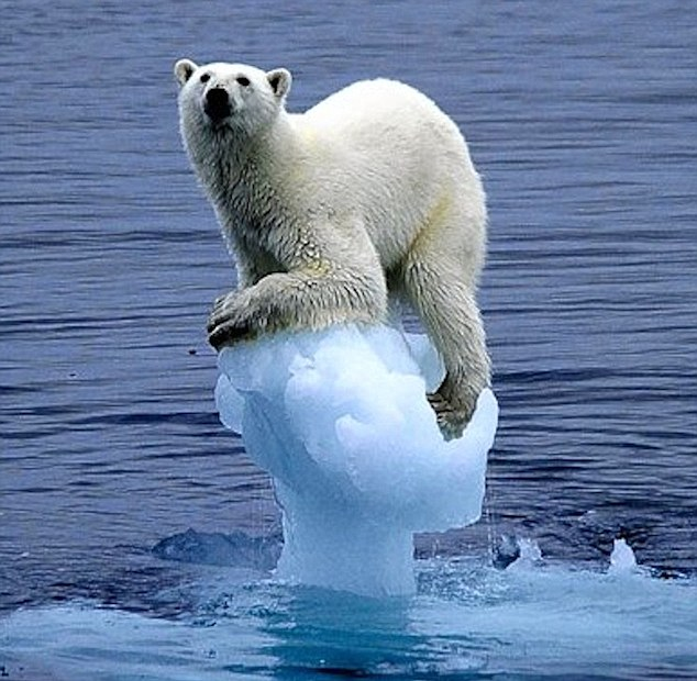 Image result for polar bear on tiny ice
