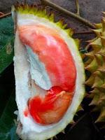 Durian Merah Balqis dari Banyuwangi.