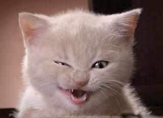 фото злой кот