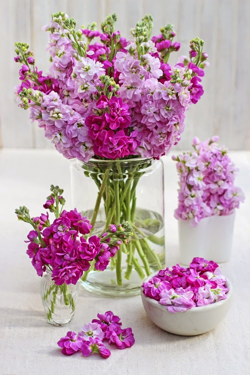 Of spring and summer a bunch for the weekend 53 more scented stock flowers mightylinksfo