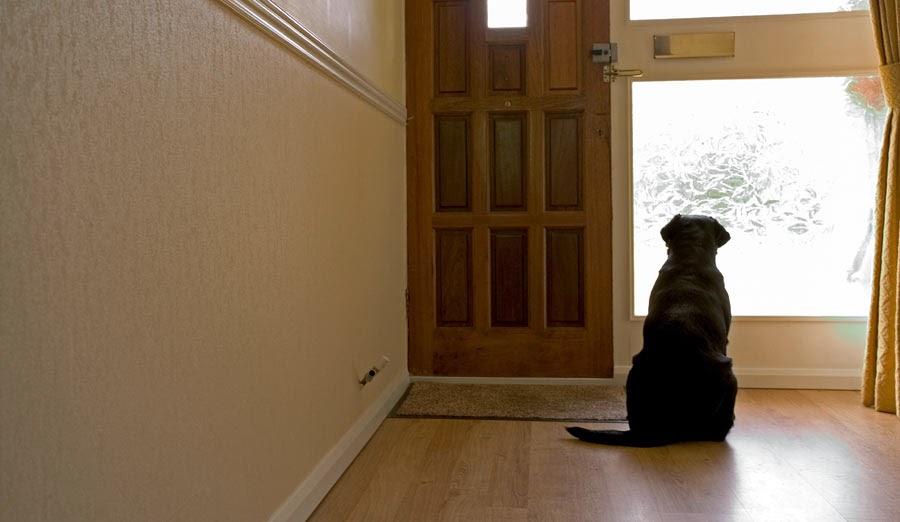 perro esperando que llegue su dueño a la casa