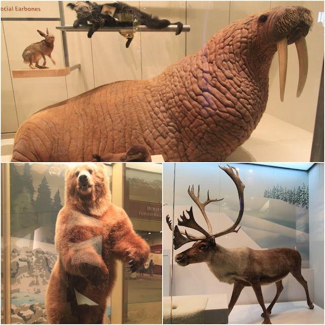 Walrus, Big bear and elk at National History Museum in Washington DC, USA