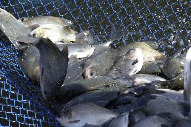 O umami pode ser encontrado em alimentos como os peixes