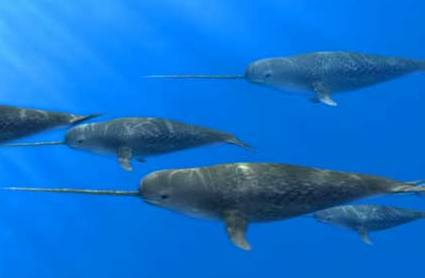 BABIES and Beautiful Mom: Baby Narwhal